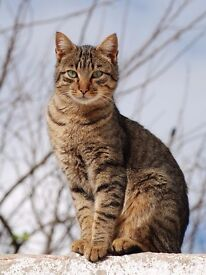 Lost in Marley Hill area. 18mth Tabby Male cat. Possibly locked in a shed or garage.
