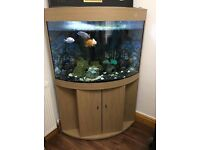 LARGE BEAUTIFUL CORNER FISHTANK