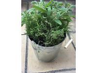Herb 🌿 Kitchen Garden