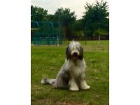 Happy hounds pet service.. Dog walking/ sitter service.. Fully insured