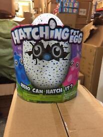 Hatching pet egg