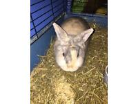 2 bunnies for sale