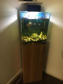 46L Fish tank with 1 Musk Turtle, 1 Yellowbelly ONO
