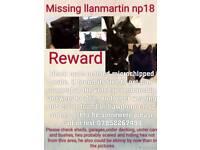 Missing llanmartin
