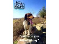 Fancy giving a doggy a holiday?