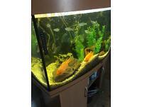 Jewel vision 260 fish tank aquarium