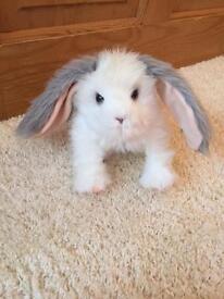 Furreal bunny rabbit