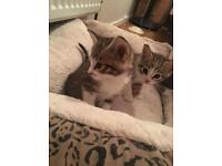 Stunning kittens for sale ready now!!!