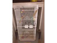Budgies,accessories and cage £20 £20