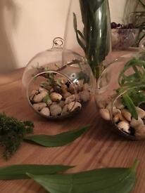 Spherical hanging terrarium