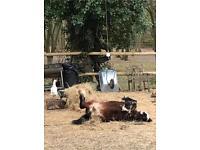 Beautiful Foal called Annie