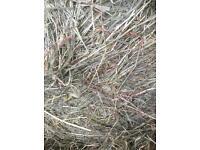 Square bale hay