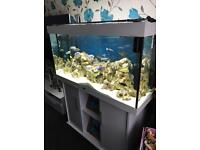 Juwel Rio 300 350Litre Aquarium full set up £385OVNO