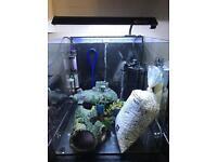 55 litre fish tank