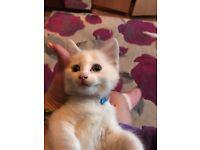 Nice kitten