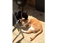 *WANTED* 3+ bed house in Pencoed that will allow 3 cats.