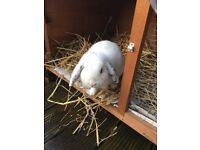 Rabbit needs rehoming