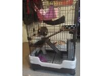 3 sister Rats, Inc cage, bedding, food