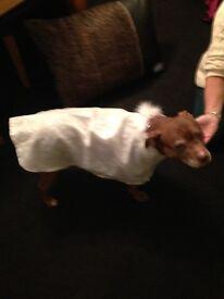 Ornate Dog Coat