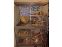 Rodent cages | Pet Equipment & Accessories for Sale - Gumtree