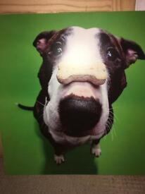Large print of cute dog