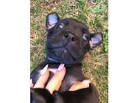 🐶🐶 Staffie pups 🐶🐶