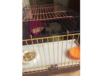 Baby girl rabbit