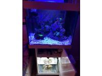Marine fish tank or tropical