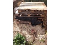 6 free wooden pallets