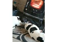 2 male pups left.. Must be 5* homes