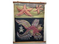 German Antique/Vintage Nature/Marine Starfish School Education Poster/Picture/Chart