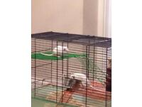 Gerbil FREE with Cage and extras