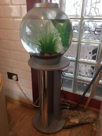 Fish Aquarium.