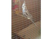 Various birds for sale