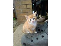 KITTENS FOR SALE 9WKS OLD READY NOW