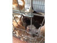 Kittens for sale all sorts Ginger grey black