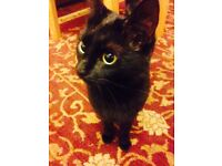 Gentle Female Cat looking for a loving home
