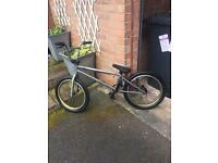 Eastern nightwasp bmx