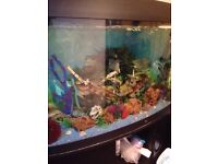 Fish tank and fish. For sale juwel. 4ft now front aquarium