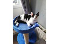 4 month old female kitten