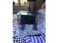 25l Tropical fish tank