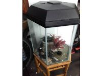 LARGE HEXAGON SIX-SIDED AQUARIUM /FISH TANK/AQUARIUM