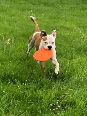 Dog Disc Naturgummi ø  22 cm Frisbee -Scheibe schwimmend Flying Fun Trixie