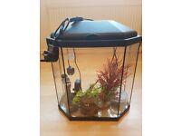 Hex 25 litre Aquarium