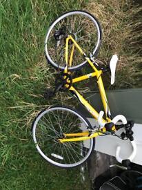 Apollo tempo bike