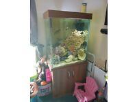 29L x 36H x 22W tall fish tank