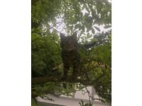 MISSING- tabby male cat named 'Steve'. Missing from Canford Cliffs area.