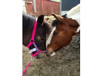 Horse & Pony for Part Loan
