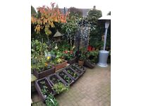 Love your garden, but need some help to keep it tidy ????