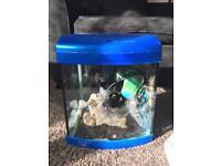 Aqua One Aquastart 320 Blue Aquarium - 30l Fish Tank - Glass Body